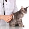 Ветеринарные клиники в Кетово